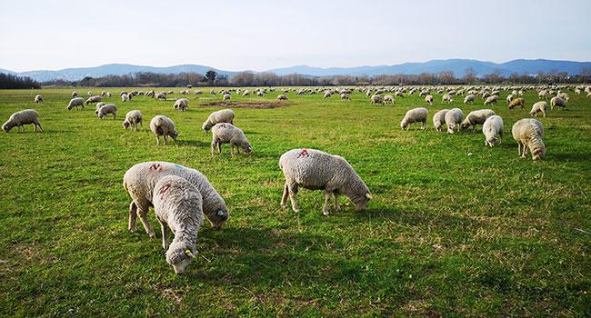 Animal grazing reducing biodiversity around the world